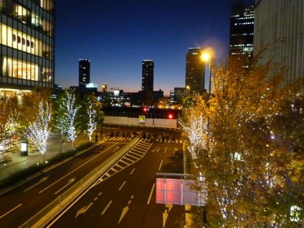 グランフロント大阪を彩る、幻想的な木々のイルミネーション