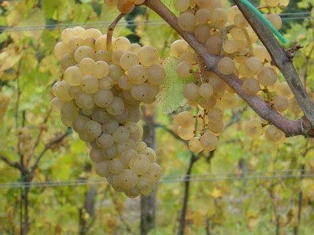 試飲可能なワインは、有機農法で栽培されたブドウだけを使用したビオワイン
