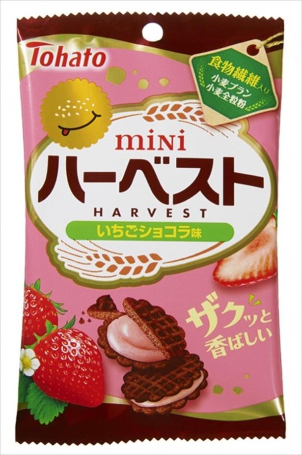 【写真を見る】イチゴクリームをサンドした「ミニハーベスト・いちごショコラ味」(100円前後)も発売!