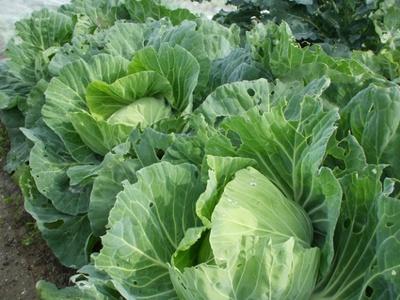 パソコンやスマホを使って安心野菜を育てよう