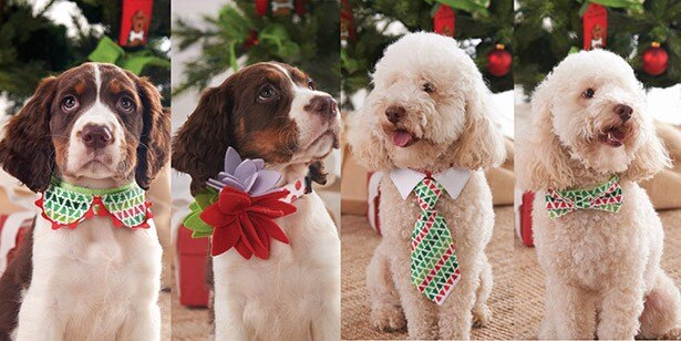 【写真を見る】愛犬をドレスアップ!蝶ネクタイやコサージュはポップでキュートなデザイン