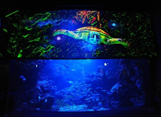暗闇の中、青く輝く大水槽に映像が投影される様子は幻想的。まるで海の中にいるかのような感覚に