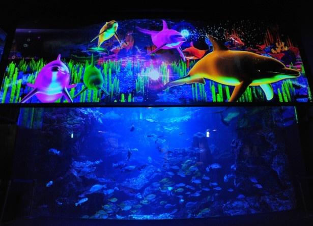 関西の水族館では初登場!大水槽に投影した約6分間の3Dプロジェクションマッピングは必見