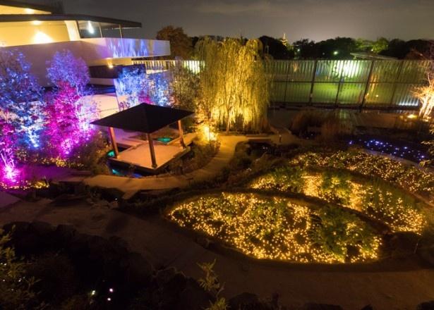 京の里山ゾーンでは、LEDや水中照明を合わせて約1万1500球の電球を使用したライトアップも実施中