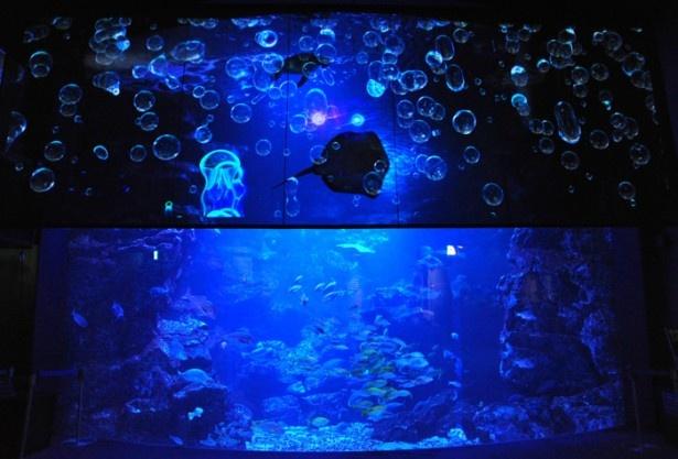 大水槽で実際に泳ぐエイやカメの影と映像が重なり合う
