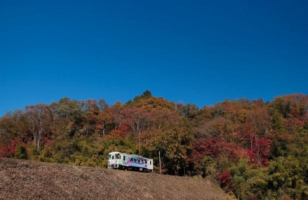 車窓からは自然豊かな風景を眺められる