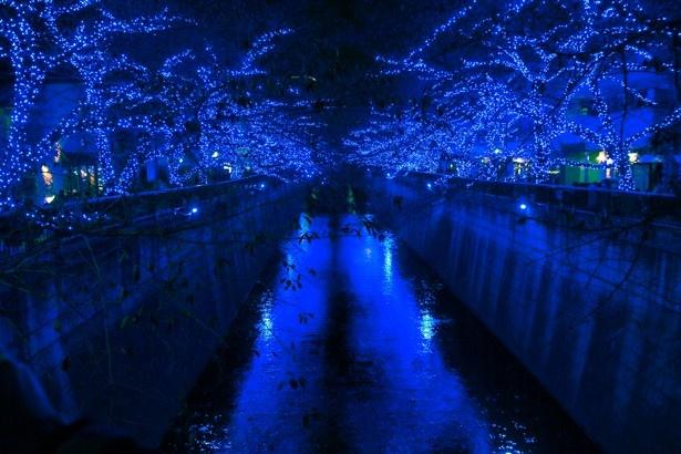桜の木に取り付けられたブルーライトを浴び、川面が青く輝く