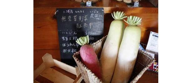 立ち寄った「ナツメグカフェ」(三浦市)では無農薬野菜を販売