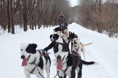 大雪原を犬ぞりで駆け抜ける爽快感は格別(※実際の体験は夜間に実施)