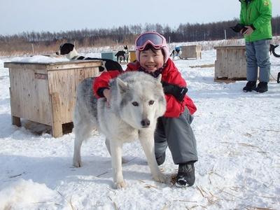 古くから北国に住む人々の大切な移動手段であった「犬ぞり」が体験できる