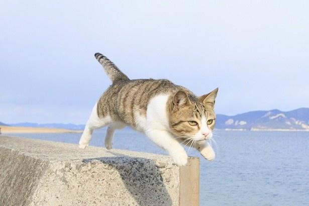 (写真1)写真集「飛び猫」の表紙に使われている一枚。真剣な表情に注目!