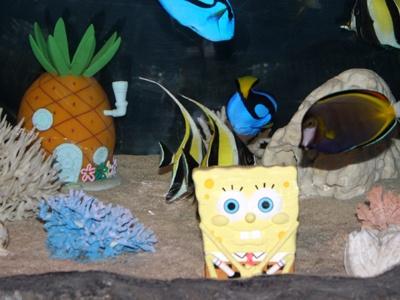 スポンジ・ボブが住んでいる町・ビキニタウンを再現した水槽も水族館の中に登場