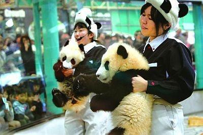 ぬいぐるみみたい!抱っこされてミルクを飲むパンダの赤ちゃん(アドベンチャーワールド)