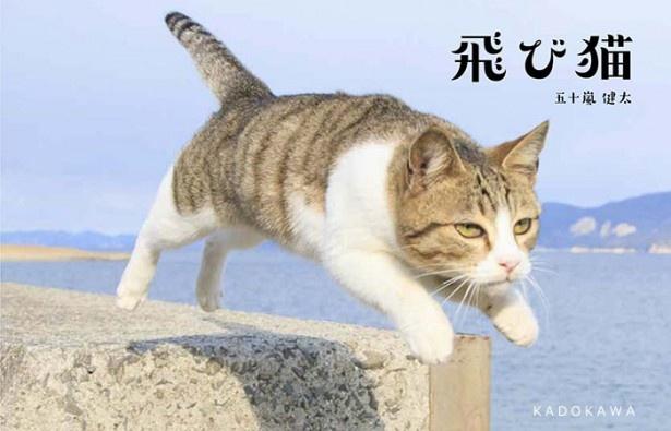 写真集「飛び猫」で話題の写真家・五十嵐健太氏主催による展示会「ねこ専」が開催中