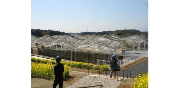 市民創発イベントが開催される「竹の海原」