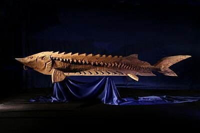 迫力満点の巨大なチョウザメ