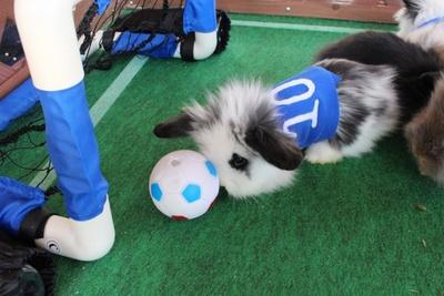 【写真を見る】キュートな鼻でドリブル、背番号10番の子ウサギがゴールを目指す!