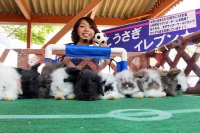 いるだけでもかわいらしい子ウサギたちが、小さなサッカーボールを追う姿は必見!