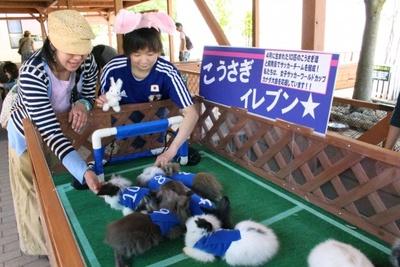 「なでしこジャパン」を応援する10匹の子ウサギたちだが、それぞれの性別はまだ不明とのこと