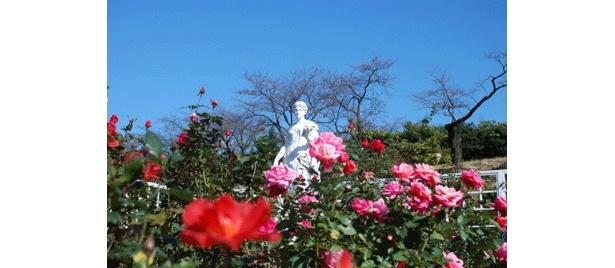 皇室などにちなんだバラを集めたロイヤルコーナー