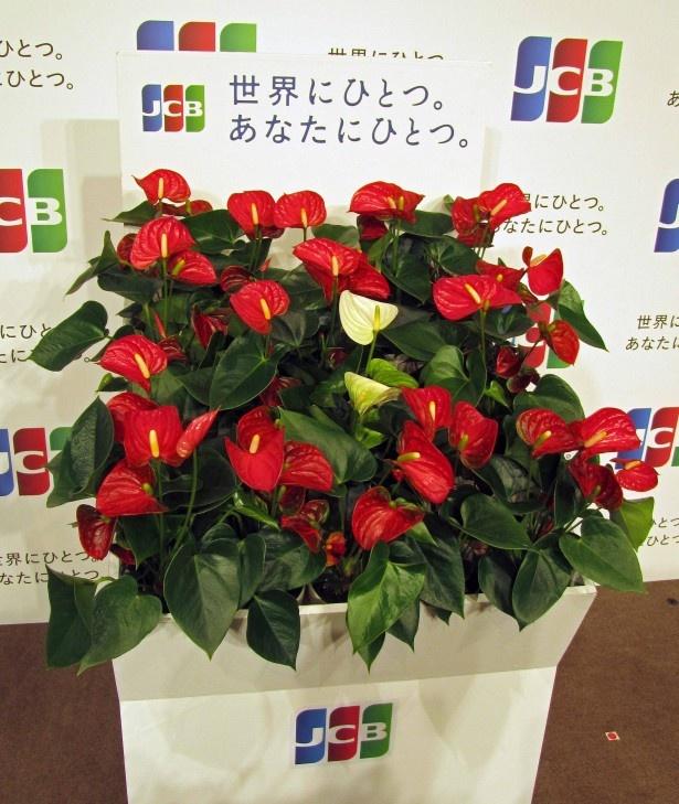 二宮和也がJCBのイベントに登場し、白いアンスリウムを植樹