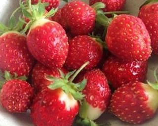 夏採りイチゴは小ぶりながらも甘味が凝縮