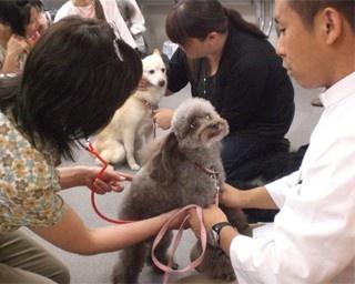 聴診器で愛犬の心音をチェックしよう!