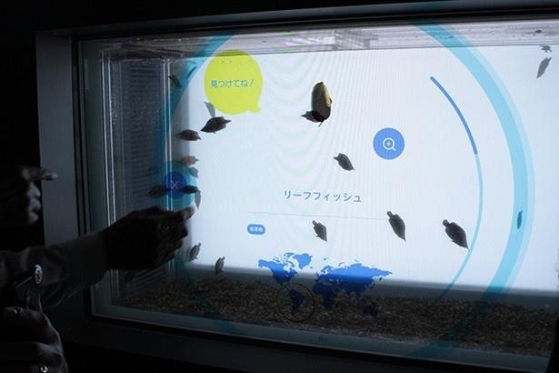 水槽にタッチパネルを搭載し、リーフフィッシュと戯れる!常設展示では世界初の演出