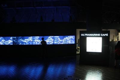 ブラックライトに照らされ、発光サンゴが放つ神秘的な光に包まれる、コーラルカフェバー