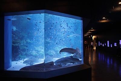 2階のアッパーフロアでは、水族館としての魅力が満載。サメや熱帯魚など、定期的にテーマを変更して企画展示を行う予定