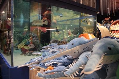 グッズ売り場・AQUASHOP LUCE(アクアショップ ルーチェ)の水槽周辺には、海の仲間たちのぬいぐるみが並ぶ