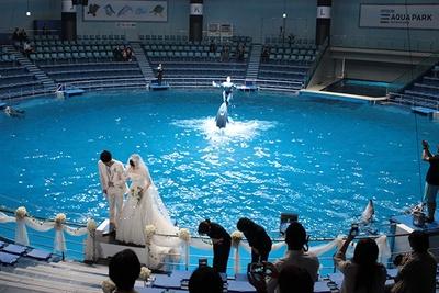 ウエディングプランも用意している。セレモニー後、イルカのショーが開幕