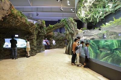 """爬虫類や両生類などをメインに展示し、ジャングルシーンを凝縮したアクアジャングル。""""生きた化石""""ともいわれるピラルクも"""