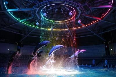 イルカのパフォーマンスはさらにグレードアップ。ウォーターカーテンや照明などで、演出を強化している