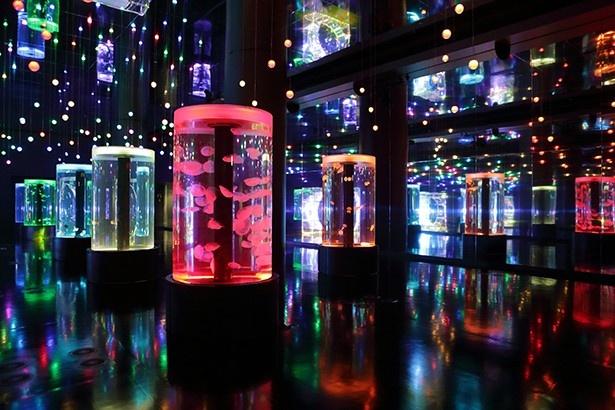 音と光とクラゲによるコラボレーションで、幻想的な空間を生み出すジェリーフィッシュランブル