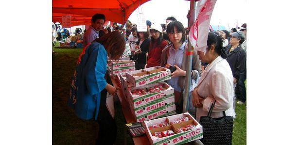 【豊浦】大粒の熟したイチゴは今が旬。購入は行列必至だ
