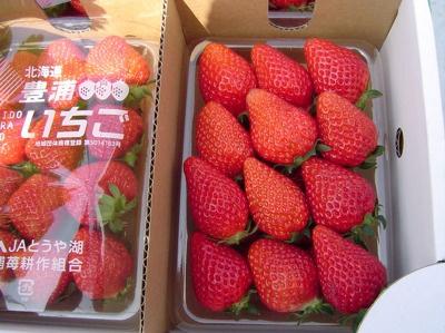 【豊浦】新鮮なイチゴ(価格未定)を買ってすぐ食べるのもよい