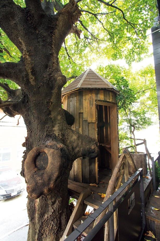 【写真を見る】レ・グラン・ザルブルは、大きなタブノキに抱かれた一軒家カフェ。1階のフラワーショップ脇にあるハシゴを上り、ツリーハウスへ潜入!
