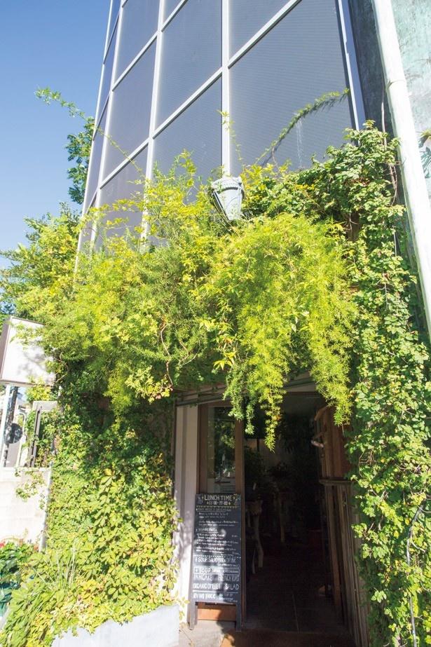 緑に覆われた、アーヴィングプレイスのカフェ入口。うっかり見逃さないよう注意して
