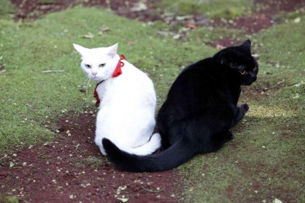 玉之丞と黒猫のヤムヤムとの恋の行方は果たして…