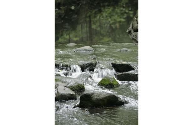 谷沢川のせせらぎに癒される