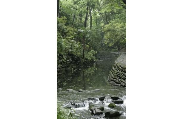 木々が茂る散策路を歩いて行くと…【渓谷の爽やか画像】