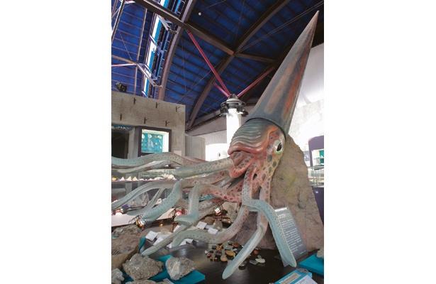 イカじゃないよ!巨大な「チョッカクガイ」がお出迎えする貝専門の博物館「貝の館」