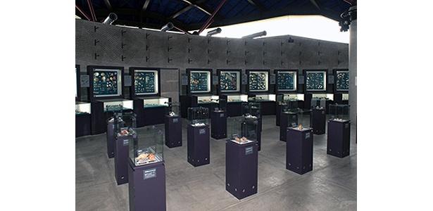 3万点もの所蔵コレクションのうち、常時5000点の貝が所狭しと陳列されている館内