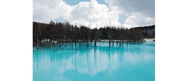 白金温泉の近くに「白金の青い池」と呼ばれる絶景スポットがある。未整地のため、残念ながら場所はヒミツ