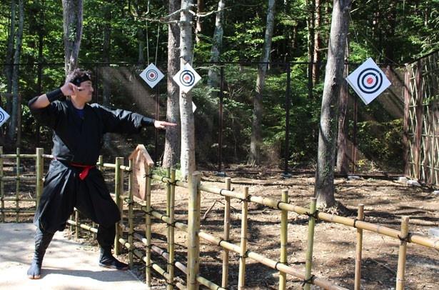 【写真を見る】神経を集中して的を射抜く!忍野手裏剣道場で、忍者の技に挑戦