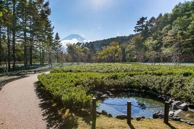 世界遺産の富士山をバックに、緑が豊かに生い茂る