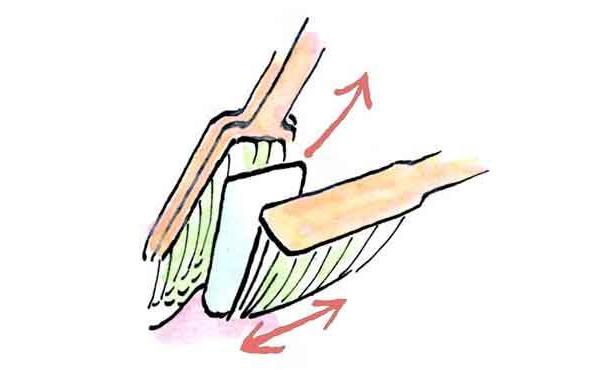 正しい歯ブラシの使い方はこれ!