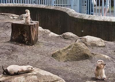 小ぢんまりとした動物園ならではの、動物との距離の近さがいい