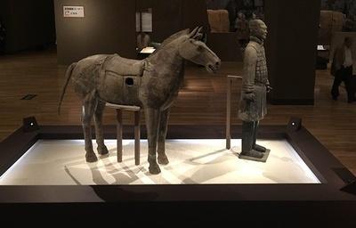 「軍馬」(写真左)と「騎兵俑」(同右)の展示